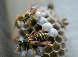 bee on hive